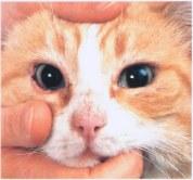 Controlli for Gatto che starnutisce